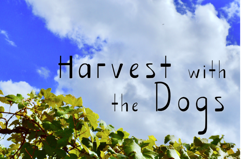 Harvest with the Dogs and Chateau Morrisette Vineyard Experience