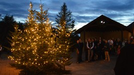 Chateau Morrisette Winery tree lighting